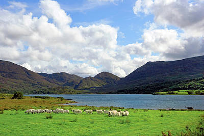 Sheep Near A Small Lake In The Gap Art Print