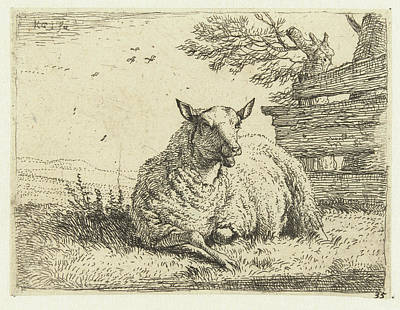 Fence Drawing - Sheep On A Fence, Karel Dujardin by Karel Dujardin