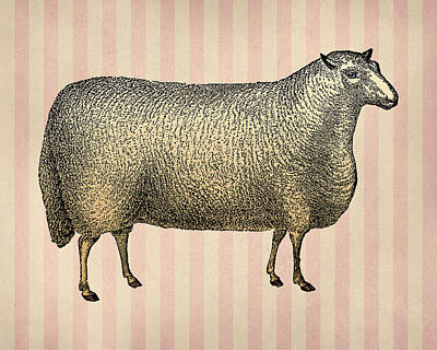 Engraving Digital Art - Sheep Vintage Illustration Engraving by Flo Karp