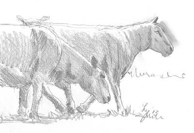 Sheep Drawing - Sheep Walking by Mike Jory