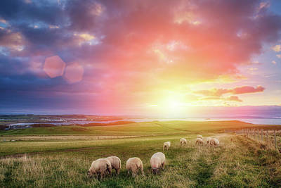 Photograph - Sheeps In Ireland At Sunset by Mammuth