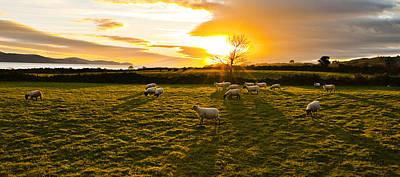 Photograph - Sheeps Meadow by E j Carr