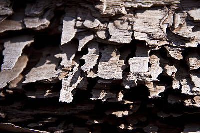 Sheets Of Bark Art Print