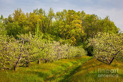 Photograph - Shelburne Orchard by Susan Cole Kelly