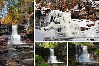 Photograph - Sheldon Reynolds Falls In Every Season by Gene Walls