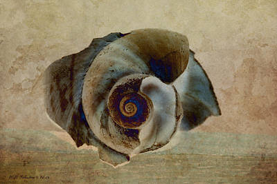 Photograph - Shell 16 by WB Johnston