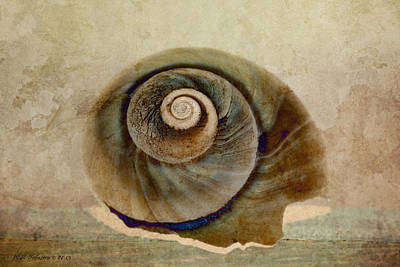 Photograph - Shell 17 by WB Johnston