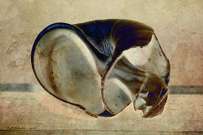 Photograph - Shell 18 by WB Johnston