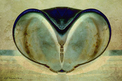 Photograph - Shell 19 by WB Johnston