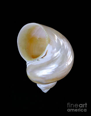 Photograph - Shell 328 by Kate McKenna