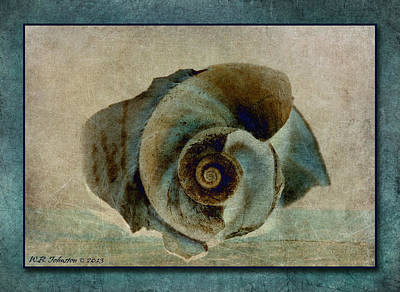Photograph - Shell 8 by WB Johnston