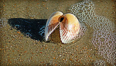 Photograph - Shell And Foam by Linda Brown