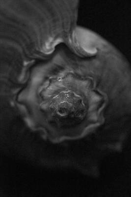 Photograph - Shell Art by Amazing Jules