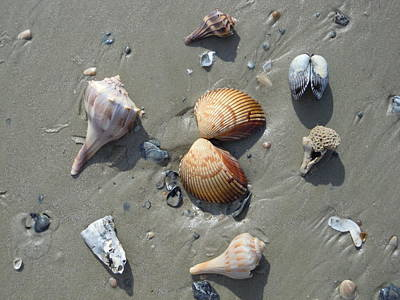 Photograph - Shell Circle by Ellen Meakin