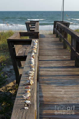 Photograph - Shell Collection by Kay Pickens