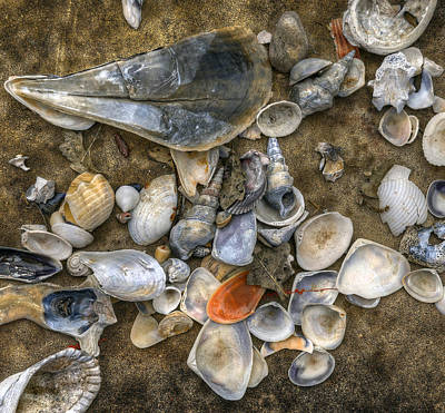 Photograph - Shell Collection by Wayne Sherriff