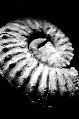 Photograph - Shell Fossil by Richelle Munzon