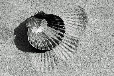 Photograph - Shell In Black by Denise Pohl