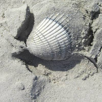 Shell Photograph - Shell In Sand by Cathy Lindsey