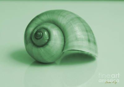 Shell. Light Green Art Print