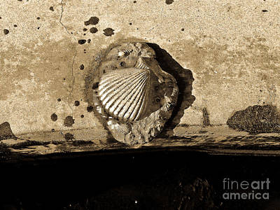 Photograph - Shell No.6 Beige  by Fei Alexander