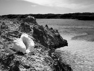 Photograph - Shell On Dominican Shore Bw by Heather Kirk