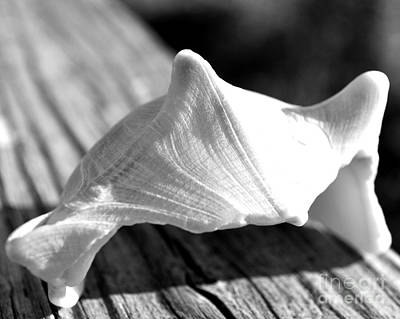 Photograph - Shell On Railing by Kathy Flood