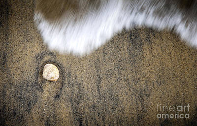 Wild Horse Paintings - Shell on Sand by THP Creative
