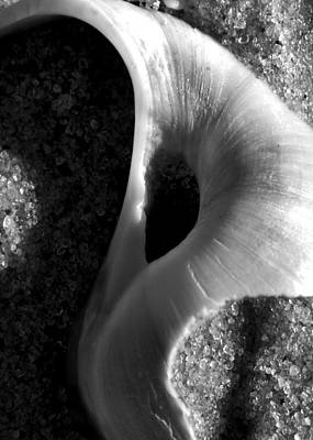 Photograph - Black And White Shell Portrait by Charles Harden