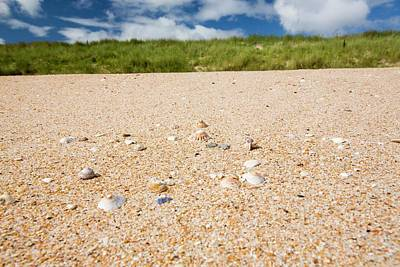 Shell Sand On The Beach With Limpet Shell Art Print