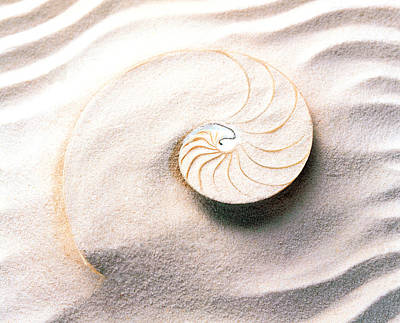 Shell Spiral Photograph - Shell Spiraling Into Wavy Sand Pattern by Panoramic Images