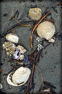 Photograph - Shell Study by Ronda Broatch