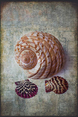 Shell Texture Print by Garry Gay