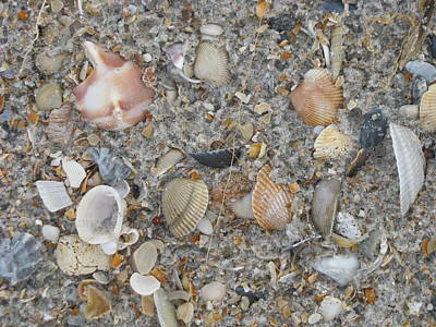 Photograph - Shell Variety by Ellen Meakin