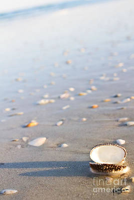 Photograph - Shells 02 by Melissa Sherbon