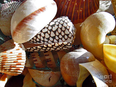 Nighttime Street Photography - Shells 1 by Virginia Simmons