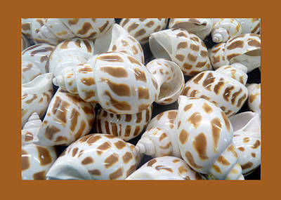 Photograph - Shells - 7 by Carla Parris