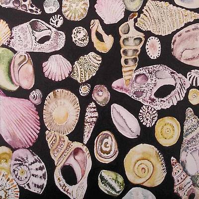 Painting - Shells By C . 1.3 by Cheryl Miller