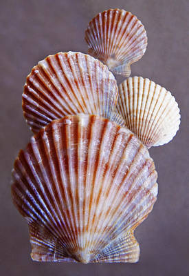 Photograph - Shells by David and Carol Kelly