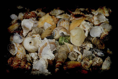 Photograph - Shells by Ernie Echols