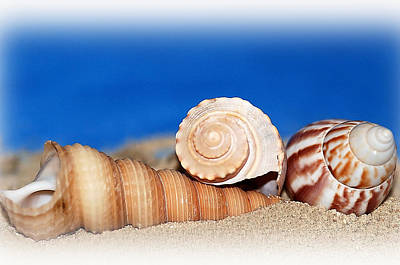 Shells In Sand Art Print by Francie Davis