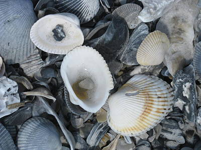 Photograph - Shells In Shells 2 by Ellen Meakin