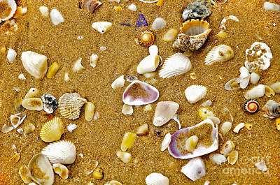 Shells In The Sand Art Print by Kaye Menner