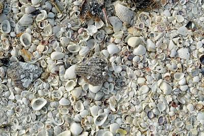 Shells On A Beach Art Print