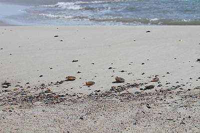 Shell Photograph - Shells On Little Island by Cathy Lindsey
