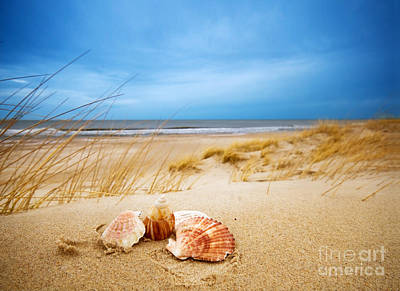 Beautiful Photograph - Shells On Sand by Michal Bednarek
