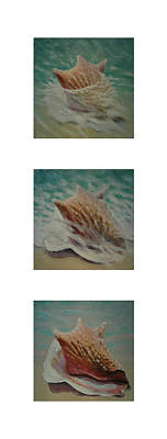 Shells Triptych 2 Art Print by Don Young