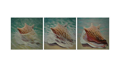 Shells Triptych Art Print by Don Young