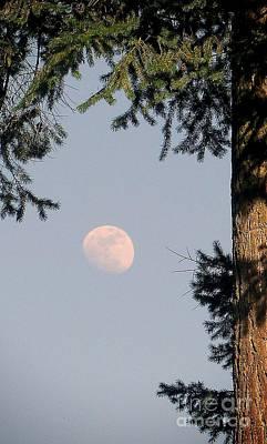 Photograph - Shelter Of The Moon  by Susan Garren