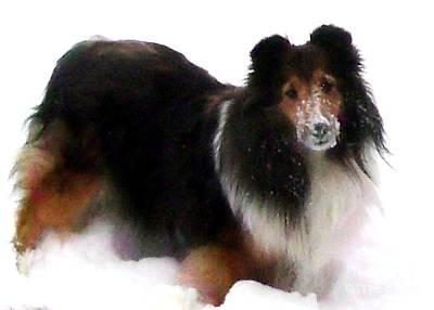 Shetland Sheepdog Digital Art - Sheltie Loves The Snow by Gail Matthews